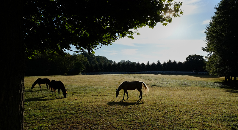 Photo of the horses in my neighbors pasture